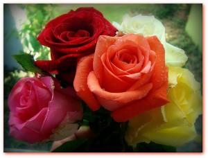 ValentinesDay - Roses