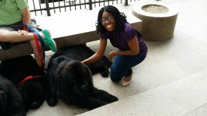 #100HappyDays - Day 10 Petting Newfoundlands